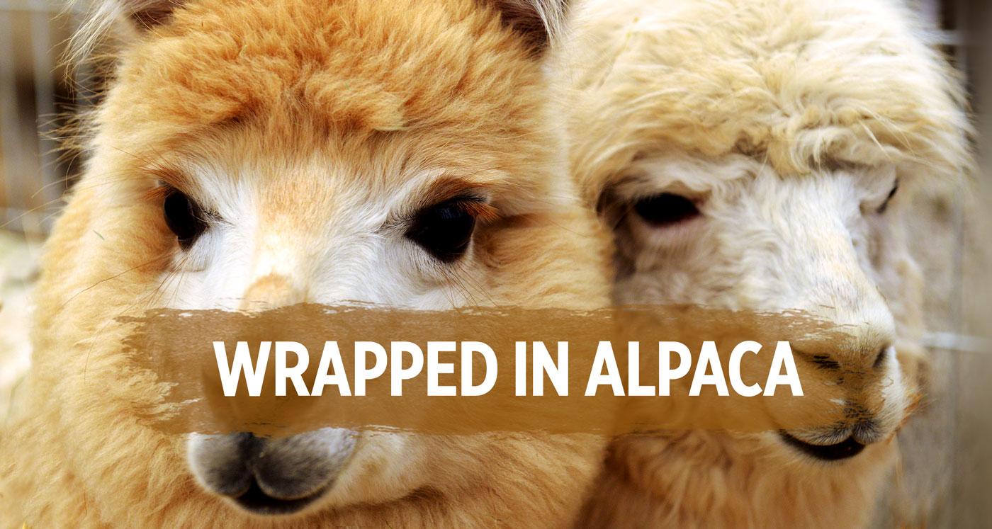 Alpaca Products